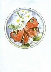 Vlinder, Caroline Mason