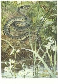 Slangen, Cornelis Jetses