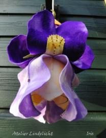 iris, voor het basislampje (zelfmaakpakketje)