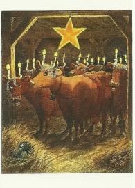 Koeien met Lucia kaarsen