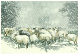Schapen in de sneeuw, Friederike Rave