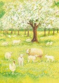 Lammetjes in de boomgaard, Marjan van Zeyl