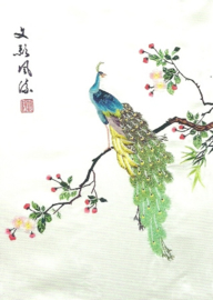 Pauw, Japans