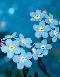 Blankbook Tushita, Wildflower