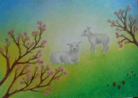 Lammetjes 1, Sonja Schoppers A4