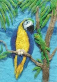 Papagaai, Heike Schwarzgruber