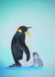 Pinguins, Brechtje Duijzer