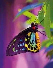 Blankbook Tushita, Butterfly