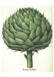 Artisjok (1613)