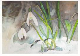Sneeuwklokjes, Frank Koebsch