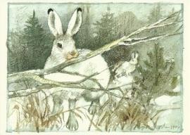 Sneeuwhaas, Ingvar Björk