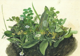 Das kleine Rasenstück, Albrecht Dürer