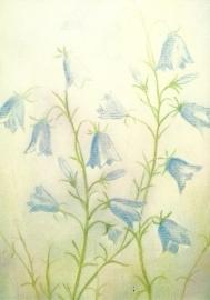 Klokjesbloemen, Jan de Kok