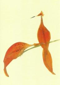 Paradijsvogels van bloesemblaadjes, Annemarie Zafrana