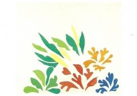 Acanthus, Henri Matisse