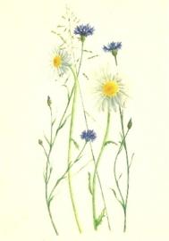 Korenbloemen en margrieten, Anna Lübsee