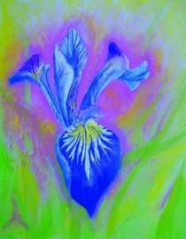 Iris, Brechtje Duijzer