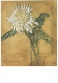 Chrysant, Piet Mondriaan