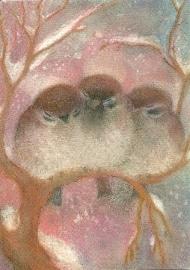 Drie mussen, Angela Koconda