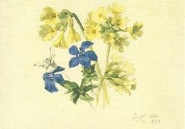 Sleutelbloem, gentiaan en edelweiss, Ernst Kreidolf