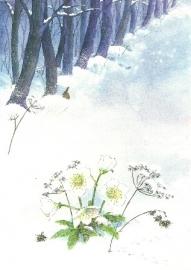 Kerstroos, Daniela Drescher