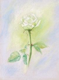 Witte roos, Marjan van Zeyl