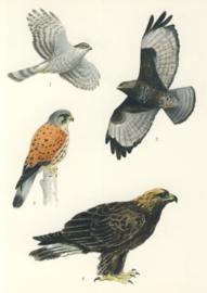 Roofvogels, Lars Klinting