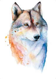 Wolf, Veerle