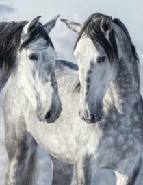 Blankbook Tushita, Magic Horses