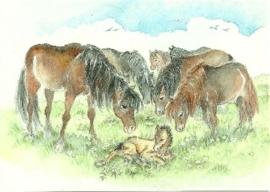 Paarden, E. Stälsjö
