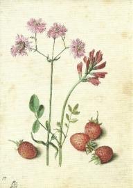 Koekoeksbloemen en aardbeien, Georg Flegel