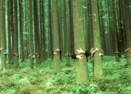 In het bos, J. Manz