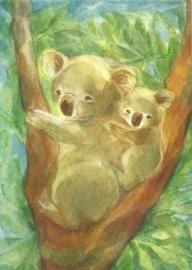 Koalaberen, Marie- Laure Viriot