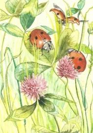 Lieveheersbeestjes, Anne Wenzel
