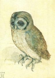 Het kauwtje, Albrecht Dürer