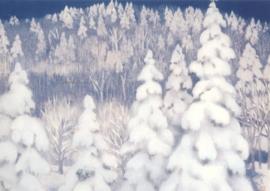 Winterbos, Higashiyama Kaii