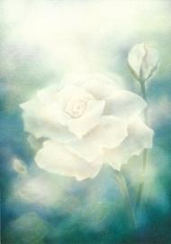 Witte roos, Jan de Kok