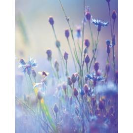 Blankbook Tushita, Summer meadow