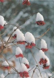 Sneeuwmutsjes, Rob Crispijn