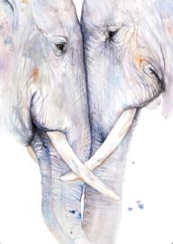 Olifanten, Veerle