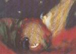 Maria in rozenhaag, Astrid Allende