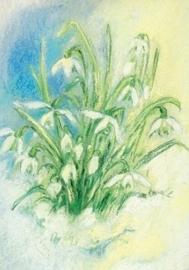 Sneeuwklokjes, Marjan van Zeyl