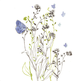 Vergeet-mij-nietje en gentiaan blauwtje, Maartje van den Noort MN07