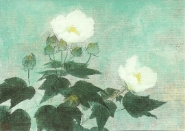 Witte rozen, Sawato Fukui