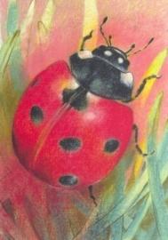 Lieveheersbeestje, Loes Botman