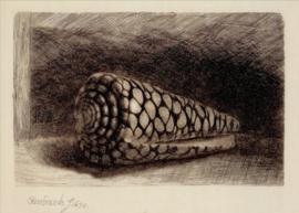 Schelp, Rembrandt