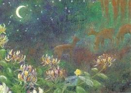 Reeën in de nacht, Daniela Drescher