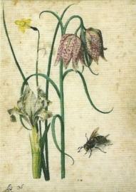 Iris, narcis, kievitsbloem en hoornaar, Georg Flegel