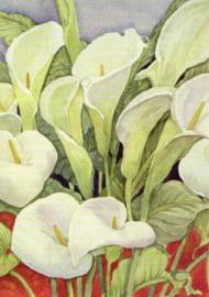 Arum lelies, L. Delevoryas