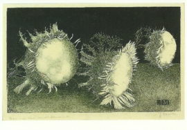 Distelbloemen, litho, Jan Mankes